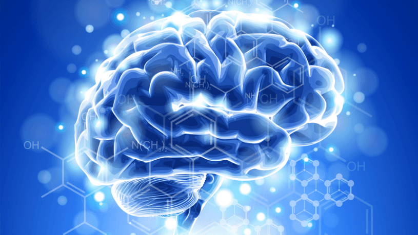 Интересные факты о головном мозге чеговека