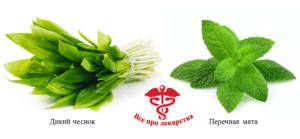 Allium ursinum and Mentha piperita