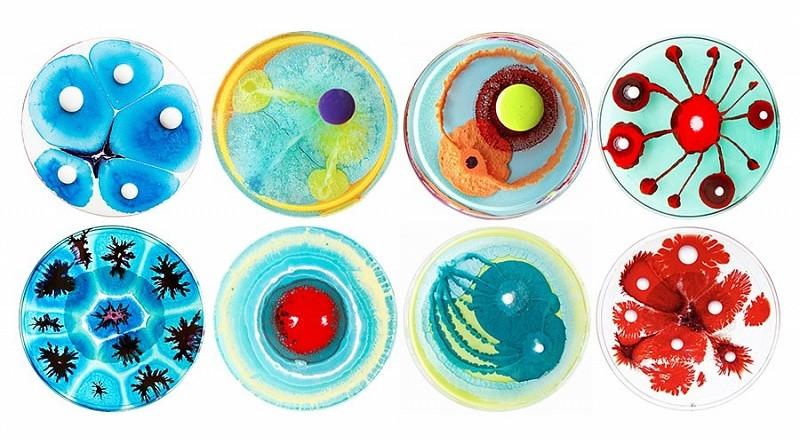 колонии бактерий КОЕ/мл