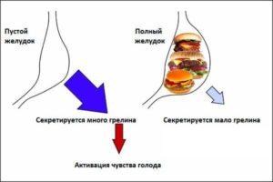 как действует грелин
