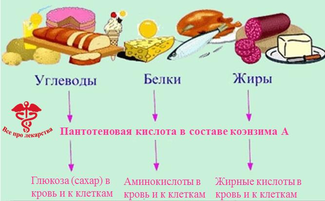 Значение витамина В5 для организма